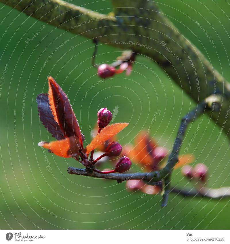 Feder Umwelt Natur Pflanze Sonne Sonnenlicht Frühling Schönes Wetter Baum Blume Blatt Blüte Wiese klein mehrfarbig grün violett Freude Fröhlichkeit