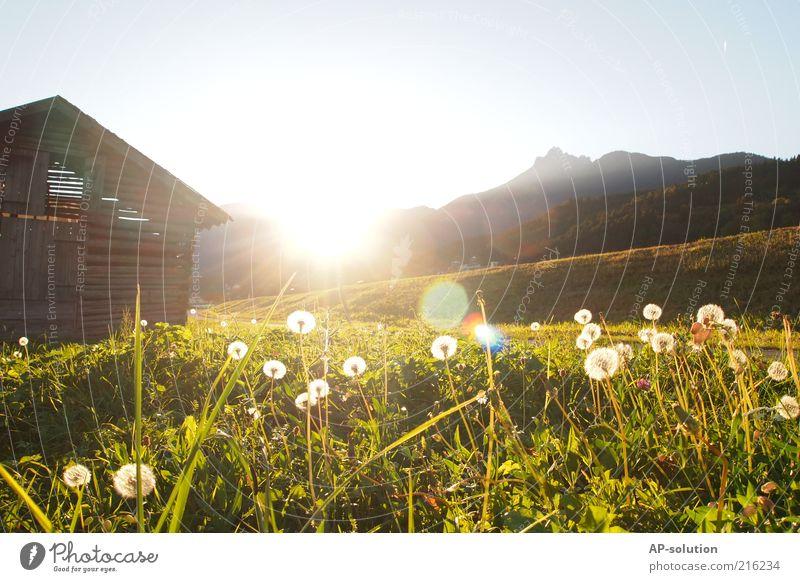 Tirol Natur Landschaft Himmel Sonne Sonnenaufgang Sonnenuntergang Sonnenlicht Frühling Schönes Wetter Blume Gras Wiese Alpen Berge u. Gebirge Idylle Farbfoto