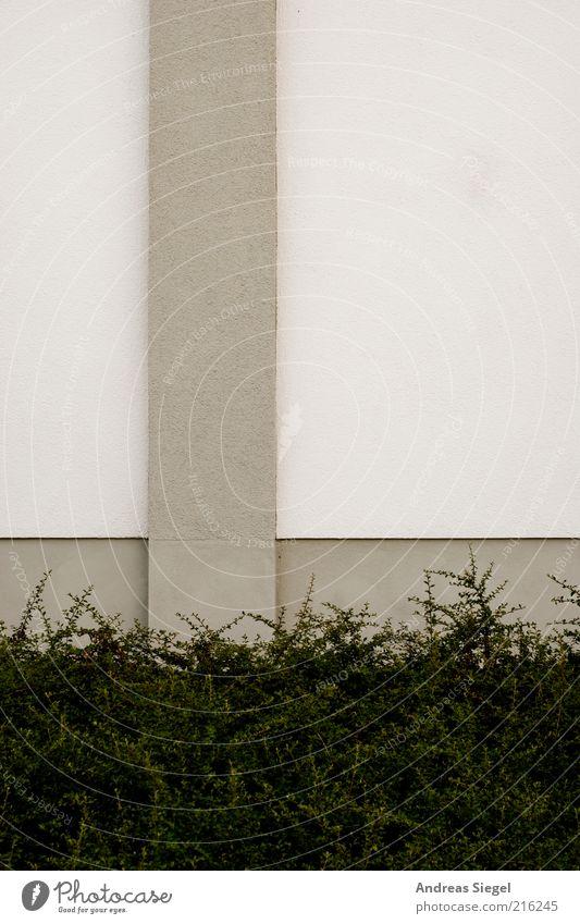 Weiß-graue Geschichten Pflanze Sträucher Grünpflanze Bauwerk Gebäude Architektur Mauer Wand Fassade Putz Beton Linie Streifen Strukturen & Formen Farbe einfach