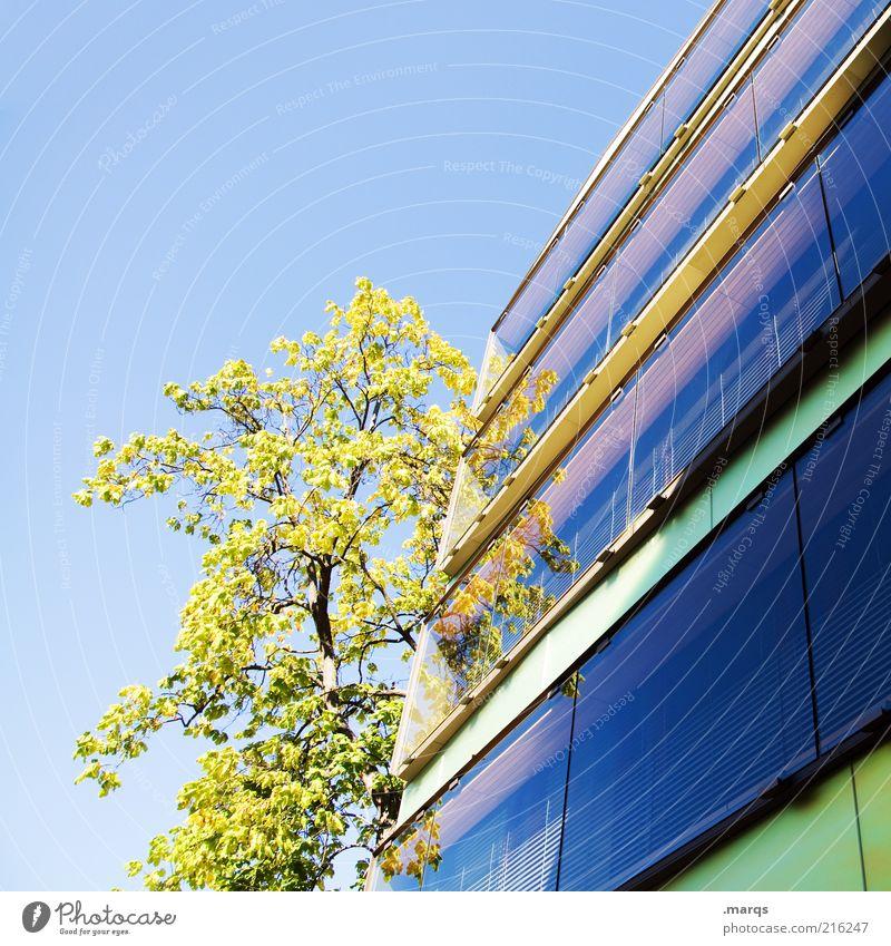 Basel Stil Wolkenloser Himmel Schönes Wetter Baum Gebäude Architektur Fassade Wachstum ästhetisch hell schön mehrfarbig Gefühle Natur Perspektive Zukunft