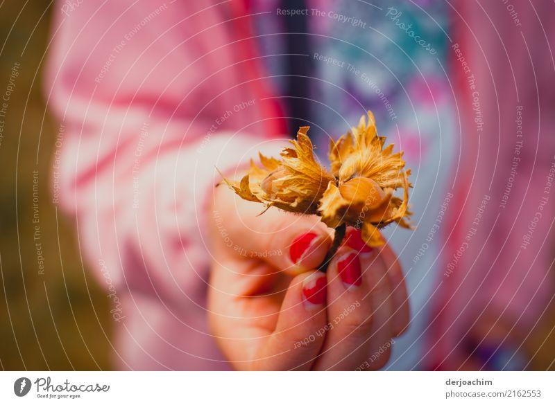 Findling. Eine Mädchen Hand mit roten Fingernägel zeigt eine Haselnuss. feminin Geschwister Schwester 1 Mensch 13-18 Jahre Jugendliche Herbst Schönes Wetter