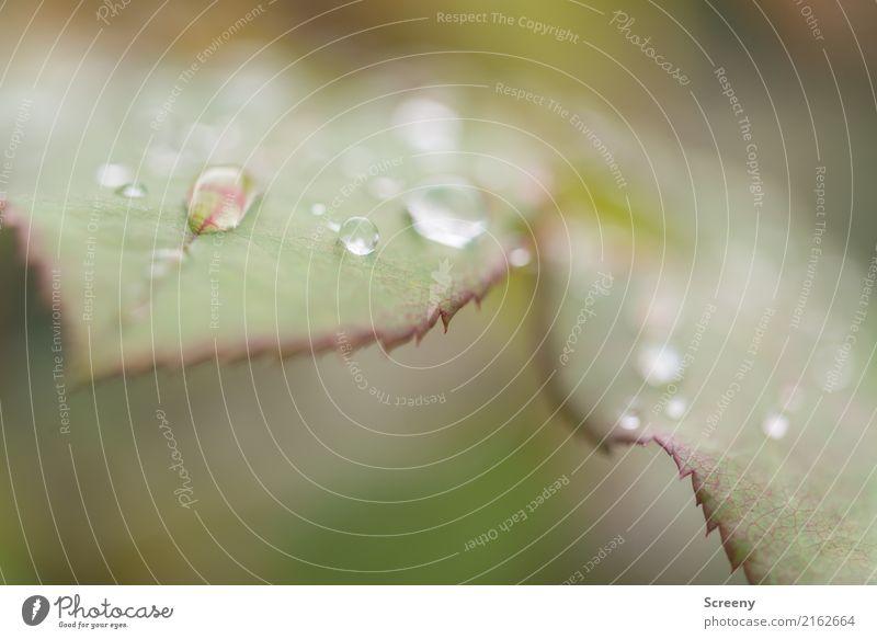 Goodbye summer #2 Natur Pflanze Wasser Blatt Wald Herbst klein Regen Park Wetter Sträucher Wassertropfen nass Klima schlechtes Wetter