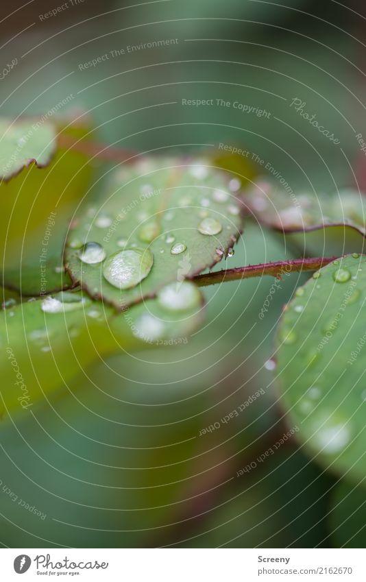 Goodbye summer Natur Pflanze Wasser Wassertropfen Herbst Wetter schlechtes Wetter Regen Sträucher Blatt Park Wald nass grün Klima Farbfoto Außenaufnahme