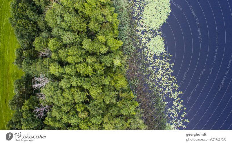 Wasserwald II Landwirtschaft Forstwirtschaft Umwelt Natur Landschaft Pflanze Erde Sommer Baum Wildpflanze Küste Seeufer Teich Menschenleer Schwimmen & Baden