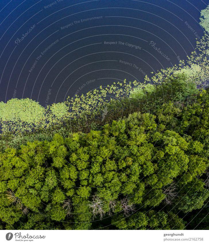 Wasserwald I Landwirtschaft Forstwirtschaft Umwelt Natur Landschaft Pflanze Sommer Baum Sträucher Wald Küste Seeufer Teich Menschenleer Schwimmen & Baden blau