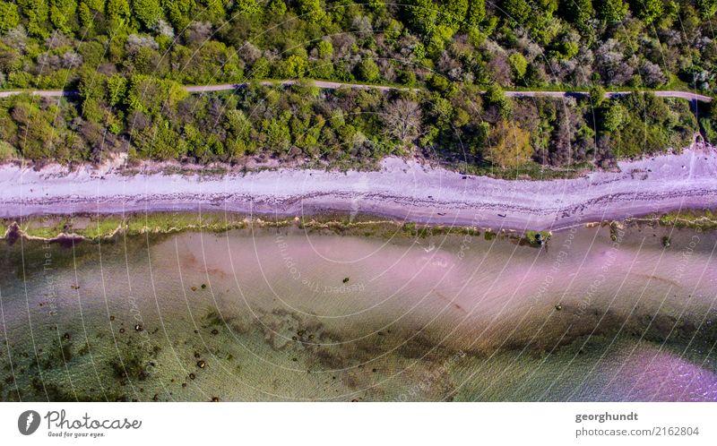 Strandstreifen ruhig Umwelt Natur Landschaft Tier Frühling Sommer Pflanze Baum Wald Küste Seeufer Flussufer Ostsee Meer Gefühle Stimmung Farbfoto Luftaufnahme