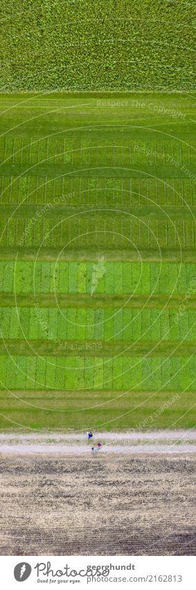Parzellenversuche Leben Ferien & Urlaub & Reisen Tourismus Ausflug Freiheit Joggen wandern Landwirtschaft Forstwirtschaft Umwelt Natur Landschaft Pflanze Erde