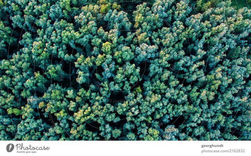 Krohnenblick Natur Pflanze Sommer Landschaft Baum Tier Wald Umwelt Abenteuer Baumkrone Urwald