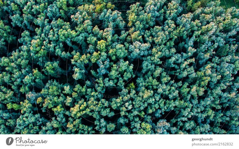 Krohnenblick Umwelt Natur Landschaft Tier Sommer Pflanze Baum Wald Urwald Abenteuer Baumkrohne Baumkrone Farbfoto Luftaufnahme Menschenleer Abend Dämmerung