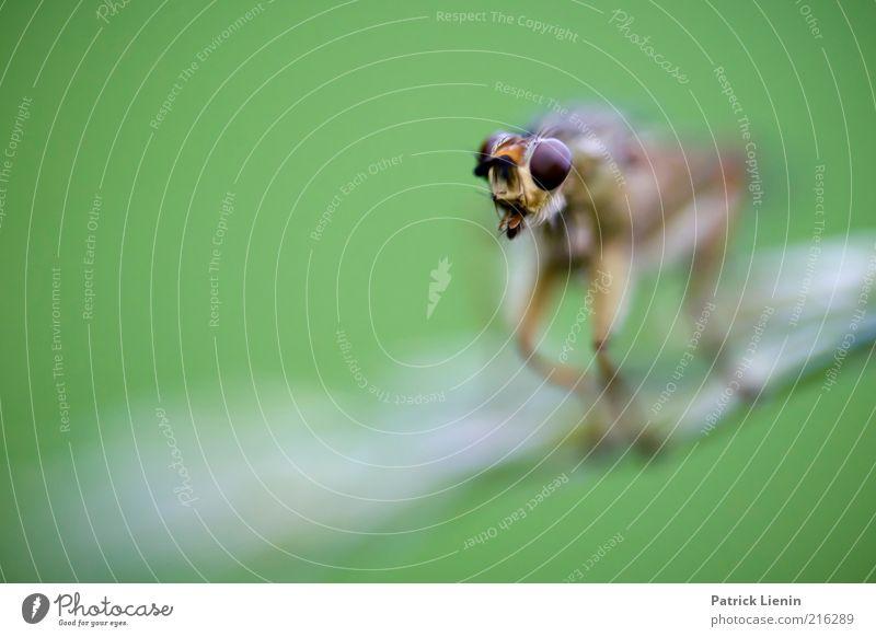 Alien [5] Umwelt Natur Tier Urelemente Luft Wildtier Tiergesicht 1 hocken Insekt Auge nah sitzen Blick Ekel grün abstrakt Facettenauge gruselig Farbfoto