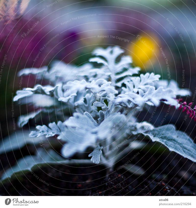 abends Natur Pflanze kalt elegant Erde Wachstum exotisch