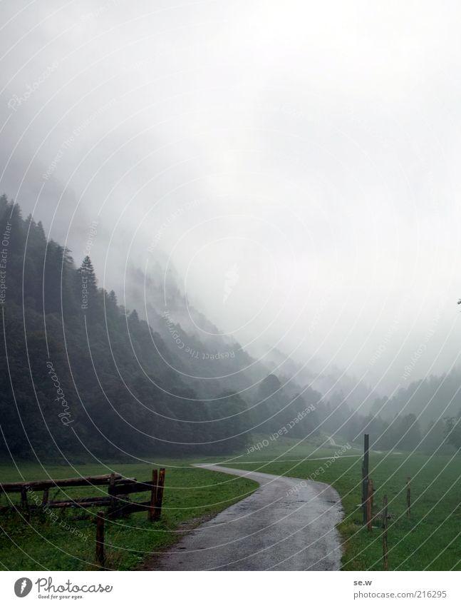Traumpfad? Natur schlechtes Wetter Nebel Regen Wiese Alpen Berge u. Gebirge Duft kalt nass grün Stimmung ruhig Einsamkeit Oberstdorf Trettachtal Wege & Pfade