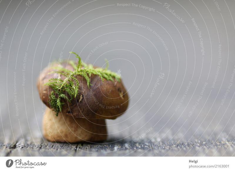 moosgrüner Hutschmuck Natur Herbst Moos Pilz Maronenröhrling Wald Holz festhalten stehen außergewöhnlich einzigartig klein natürlich braun grau