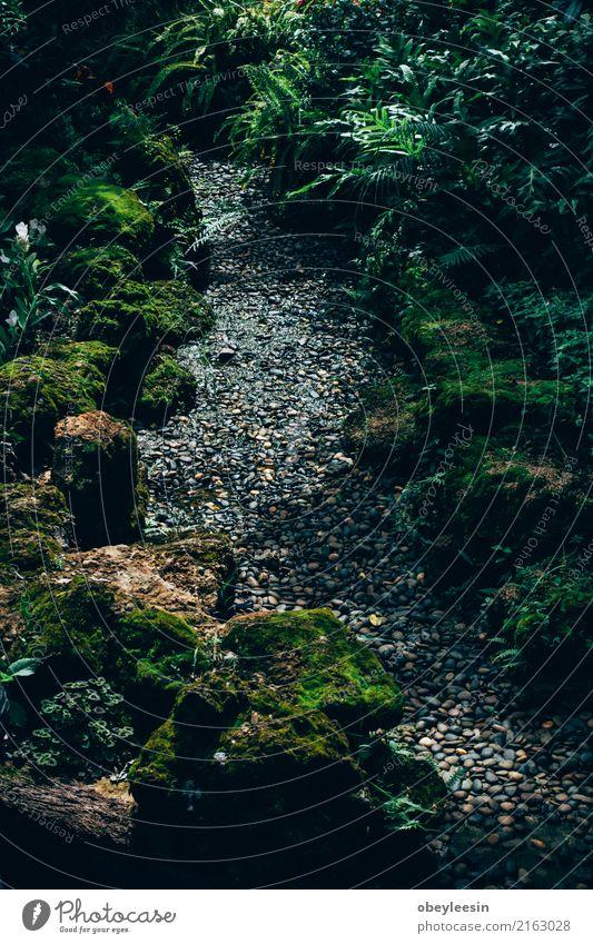 Mystische Reise voraus, ein ruhiger Weg auf einem schönen Garten Erholung Tourismus wandern Karriere Natur Herbst Baum Blatt Park Wald Teich Straße
