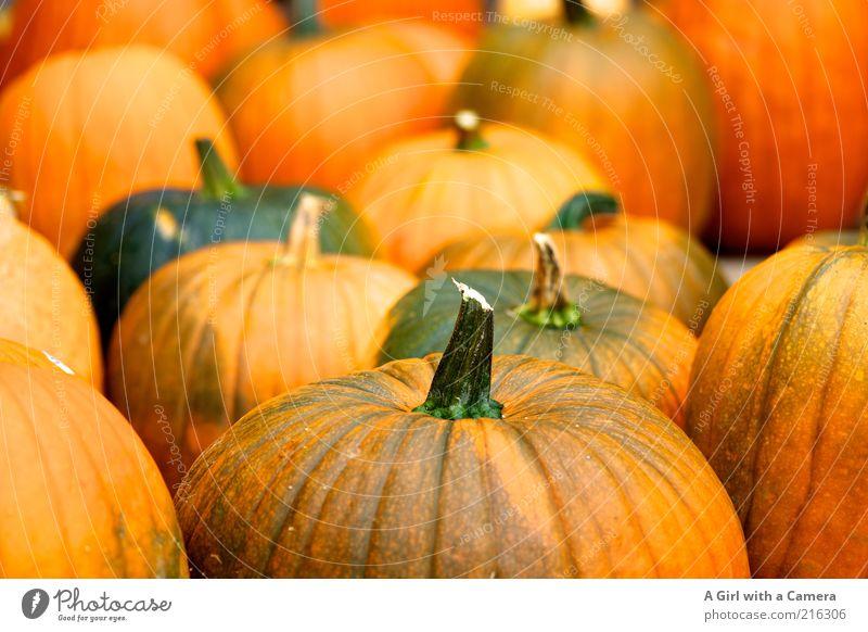 Gruselgemüsegemeinde Natur grün Herbst orange liegen natürlich Lebensmittel frisch Dekoration & Verzierung fest Gemüse Bioprodukte Halloween Kürbis Vegetarische Ernährung Kürbiszeit