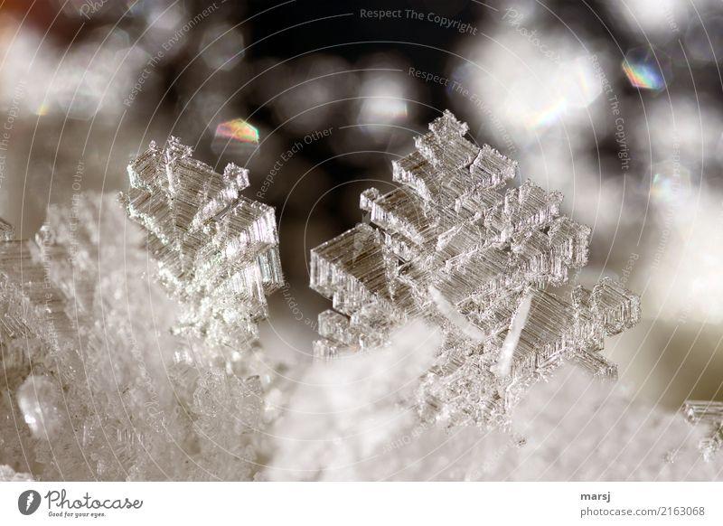 Eiskunst vom Feinsten schön Winter dunkel kalt außergewöhnlich Erfolg authentisch fantastisch einzigartig Vergänglichkeit Frost harmonisch dünn eckig Kunstwerk
