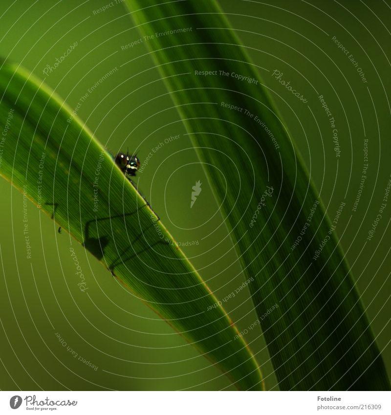 Nicht gut genug versteckt Natur grün Pflanze Sommer Blatt Auge Tier hell Umwelt Tiergesicht Insekt natürlich Wildtier verstecken Grünpflanze Libelle