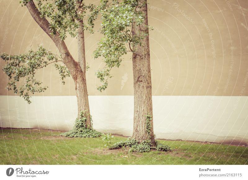 hinten im Hof Umwelt Natur Pflanze Baum Gras Stadt Haus Mauer Wand Fassade Beton Holz Linie grün Hinterhof 2 paarweise Baumstamm Efeu Traurigkeit Farbfoto