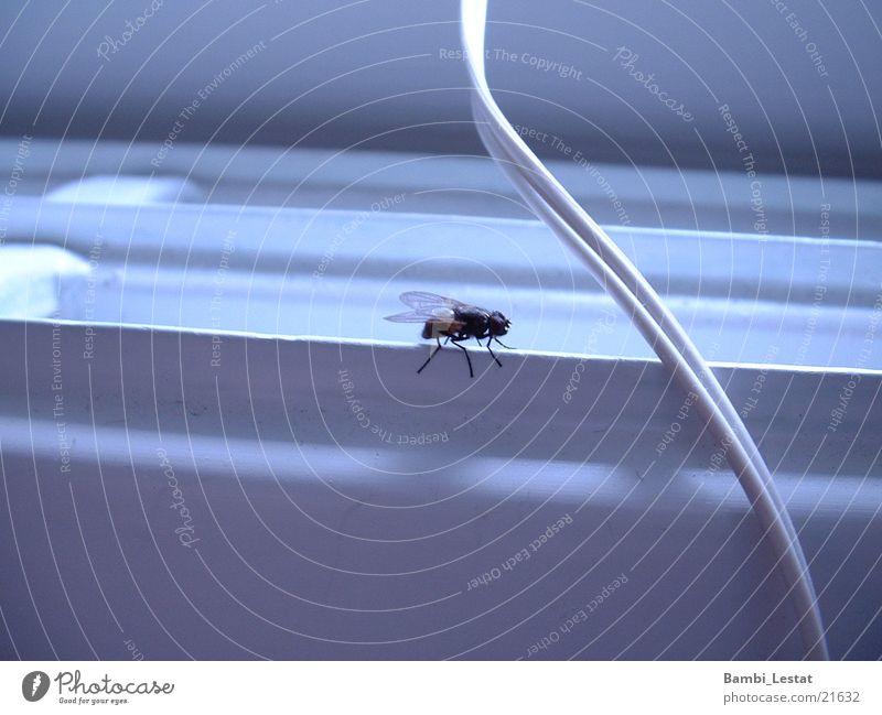 Fliege Insekt Plagegeist