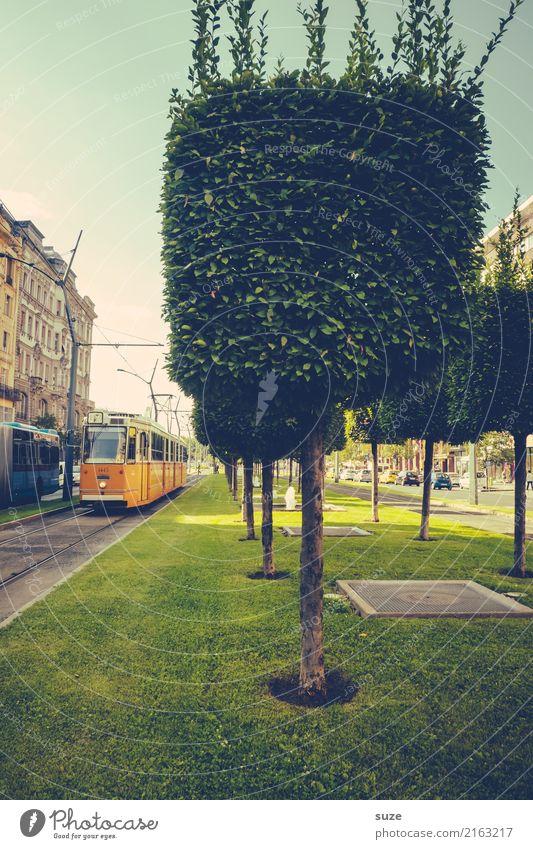 Baum-art Lifestyle Tourismus Städtereise Kunst Kunstwerk Kultur Natur Wiese Stadt Hauptstadt Stadtrand Altstadt Verkehrsmittel Verkehrswege