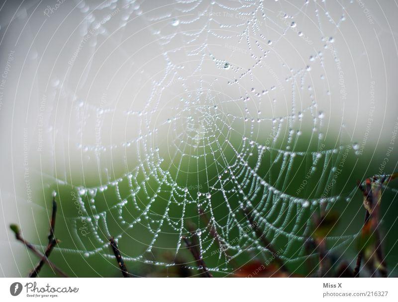 Perlenkette Natur schlechtes Wetter Regen frisch glänzend nass Netzwerk Spinnennetz Wassertropfen Tropfen Tau Morgen Farbfoto Außenaufnahme Nahaufnahme Muster