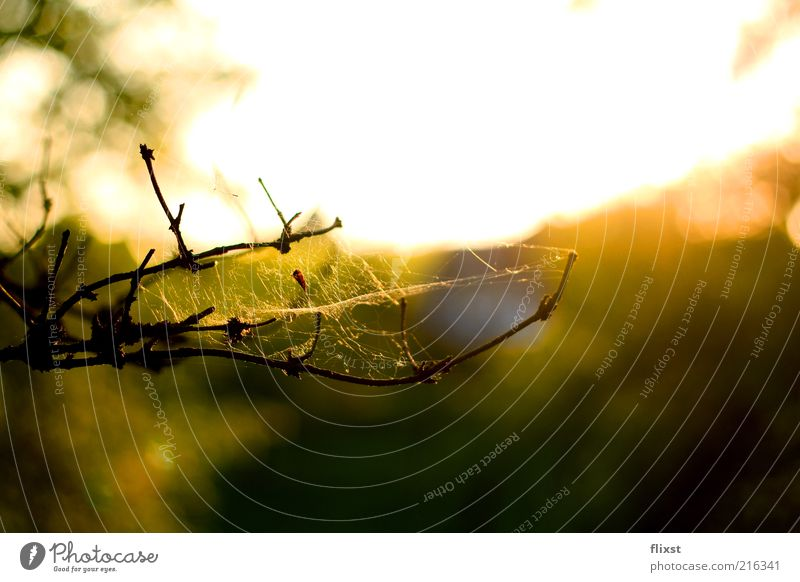 End of summer Natur Sommer Ast Schönes Wetter Zweig Spinnennetz Umwelt Spinngewebe