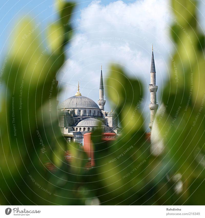 Blaue Moschee im Grünen Himmel blau grün Pflanze Ferien & Urlaub & Reisen Sommer Blatt Wolken Ferne Architektur Gebäude Fassade Tourismus Kirche Turm