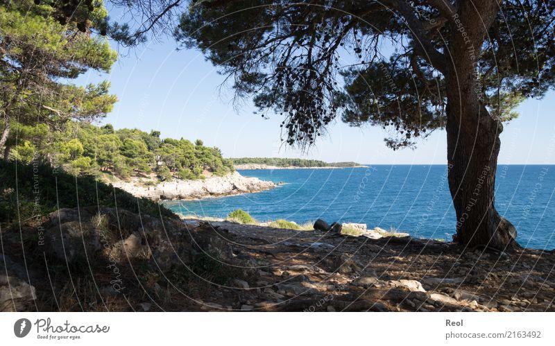 Kroatien Natur Landschaft Wasser Himmel Wolkenloser Himmel Sommer Schönes Wetter Pflanze Baum Wald Nadelwald Nadelbaum Kiefer Felsen Küste Meer Mittelmeer blau