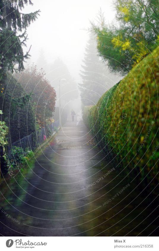trübe Aussicht Baum dunkel kalt Herbst Garten Wege & Pfade Park Regen Nebel nass Spaziergang Klima Asphalt gruselig Tanne