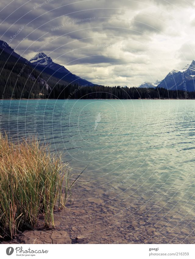 Uferzone Natur Landschaft Pflanze Erde Wasser Himmel Wolken Herbst schlechtes Wetter Wald Berge u. Gebirge Schneebedeckte Gipfel Seeufer Kanada Amerika kalt