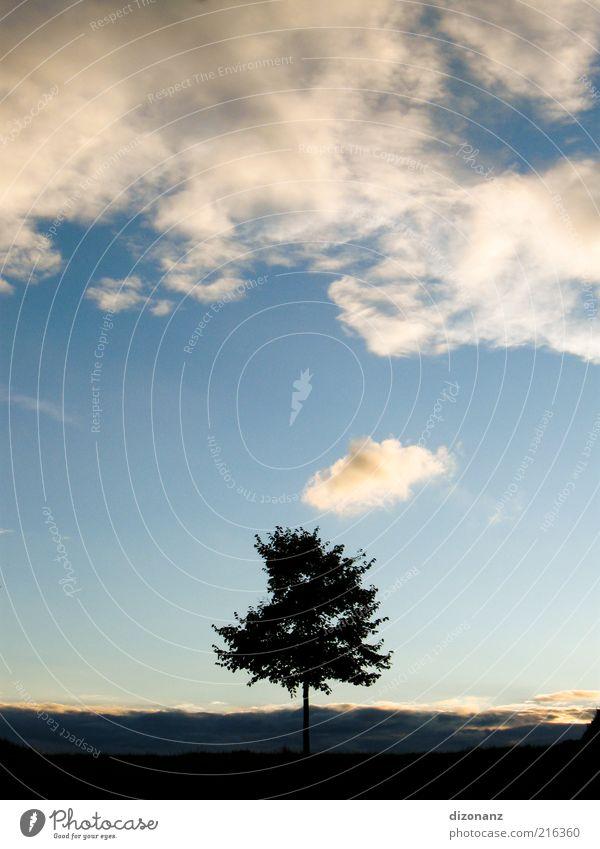 1sam. Natur Pflanze Wolken Schönes Wetter Baum Wiese elegant natürlich blau schwarz standhaft Einsamkeit Umwelt Wachstum Farbfoto Außenaufnahme Menschenleer