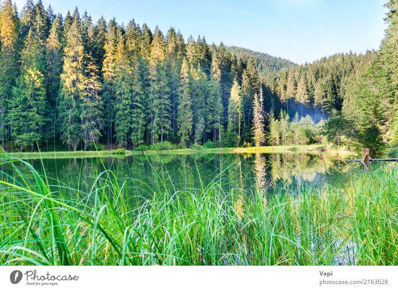 Forest See in den Bergen mit blauem Wasser Himmel Natur Ferien & Urlaub & Reisen Pflanze Sommer schön grün weiß Baum Landschaft Erholung Blatt Wald
