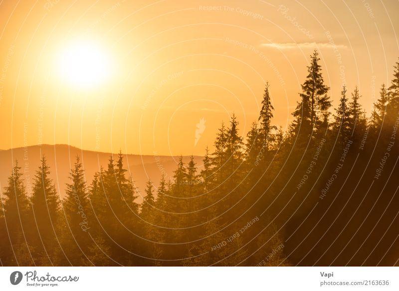 Himmel Natur Ferien & Urlaub & Reisen Himmel (Jenseits) Sommer Farbe schön grün weiß Sonne Baum Landschaft rot Wolken Wald Berge u. Gebirge