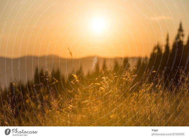 Trockenes Gras auf einem Feld bei Sonnenuntergang in den Bergen Himmel Natur Ferien & Urlaub & Reisen Himmel (Jenseits) Pflanze Sommer Farbe schön weiß Baum