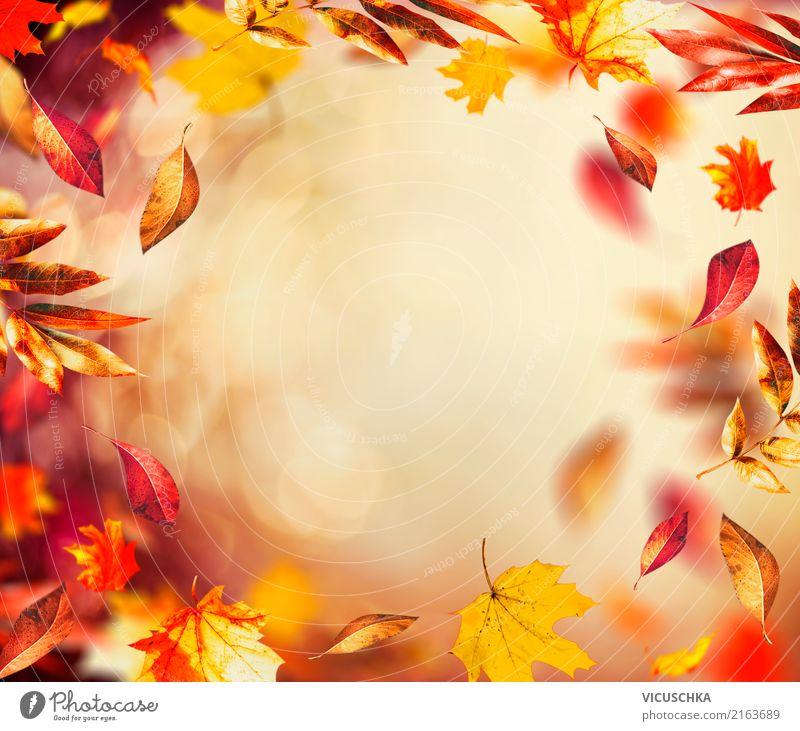 Herbst Hintergrund mit fliegenden bunten Blätter Lifestyle Design Garten Natur Pflanze Wind Sträucher Blatt Park gelb Hintergrundbild September Rahmen