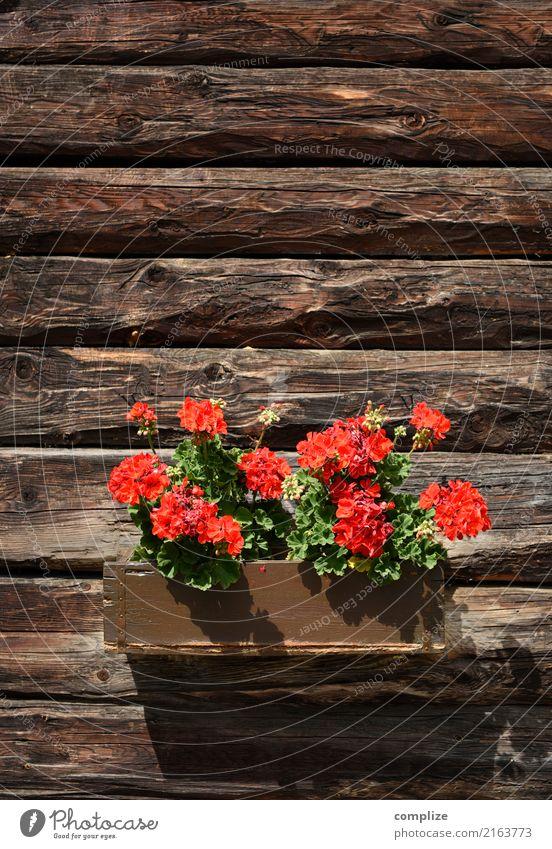 Alpenländisches Blumenbukett Ferien & Urlaub & Reisen Pflanze Sommer Blatt Ferne Blüte Holz Tourismus Feste & Feiern Ausflug Blühend Wellness Sommerurlaub Hütte