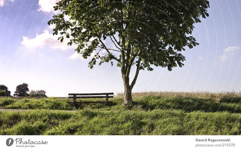 Holzbank am Baum Sommer Landschaft Himmel Schönes Wetter Blatt Wiese Feld Arnsberg Menschenleer Bank leuchten Wachstum ästhetisch blau grün ruhig Erholung Natur