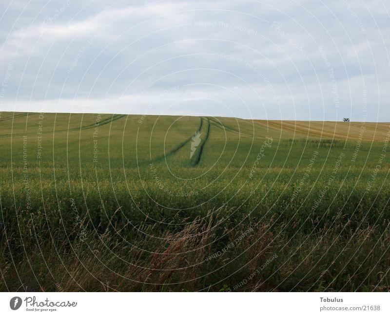 Furchen im Feld Himmel Berge u. Gebirge Feld Korn Traktorspur