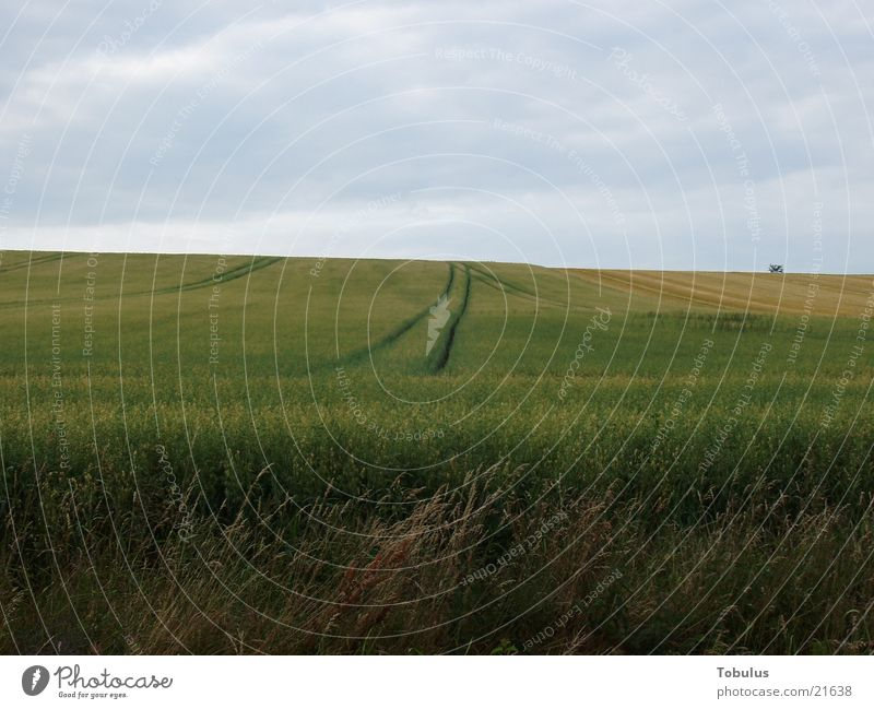 Furchen im Feld Traktorspur Berge u. Gebirge Korn Himmel