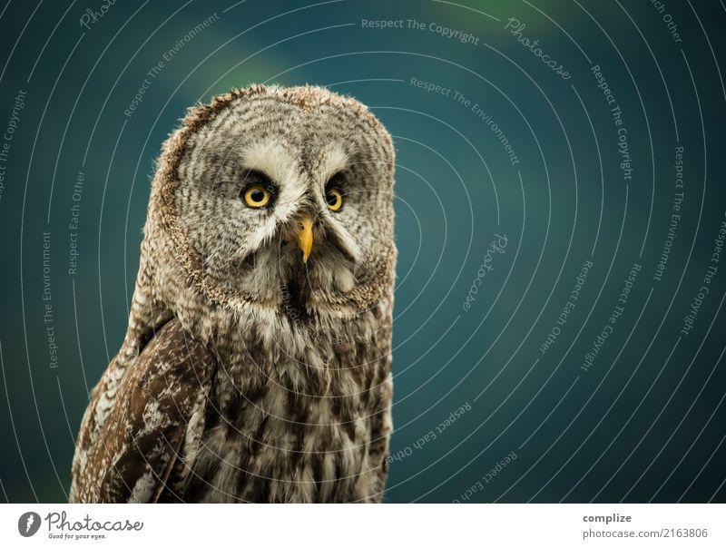 Eule Ferien & Urlaub & Reisen Tourismus Nachtleben Umwelt Natur Tier Klima Pflanze Wald Alpen Berge u. Gebirge Vogel beobachten frei Eulenvögel Kauz Tierschutz