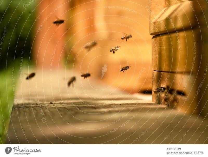 Die Bienen Honig Ernährung Wellness Sinnesorgane Umwelt Natur Pflanze Tier Blume Flügel Zukunft Zusammenhalt Schwarm Bienenstock Luftverkehr König Honigbiene