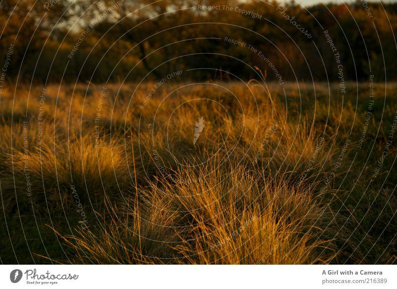 Rhöngold Umwelt Natur Landschaft Pflanze Herbst Baum Gras Wiese Wald Moor Sumpf leuchten Freundlichkeit natürlich Sauberkeit trocken wild mehrfarbig gelb Idylle