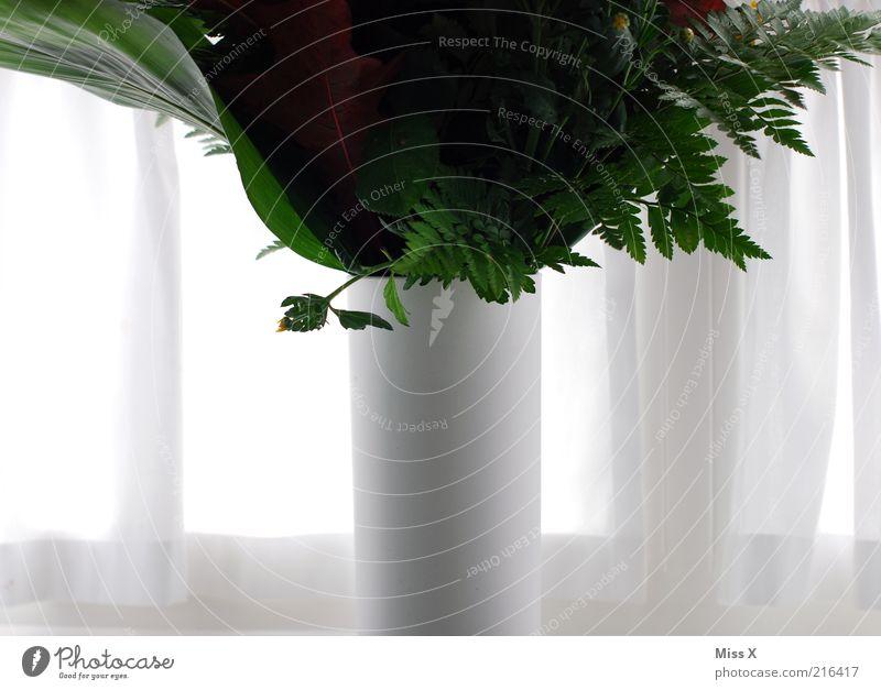 Vase Dekoration & Verzierung Pflanze Blume Blatt Blüte Topfpflanze Blühend weiß Blumenstrauß Blumenvase Vorhang Fenster Gardine Farbfoto Innenaufnahme