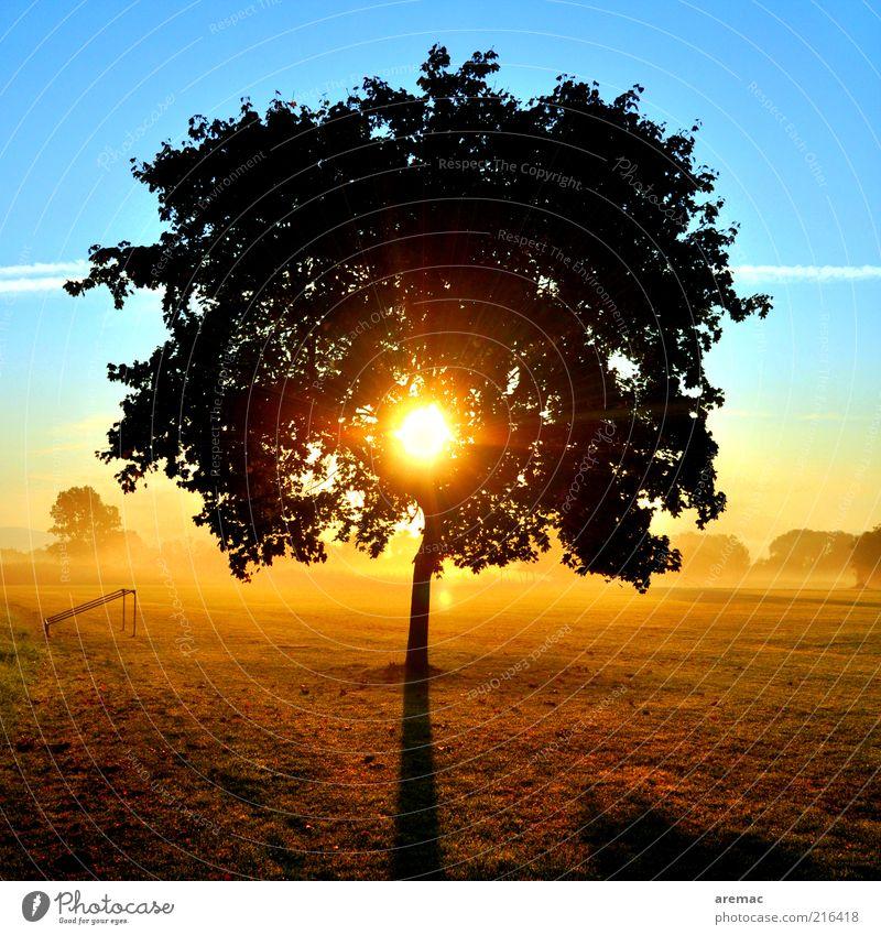 Morgensonne Natur Himmel Baum Sonne blau Pflanze ruhig Ferne gelb Wiese Herbst Landschaft Nebel Sonnenaufgang Schönes Wetter Baumkrone