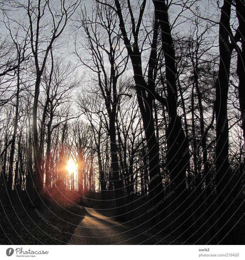 Die Tage werden kürzer Natur Baum Pflanze Wald kalt Wege & Pfade Landschaft glänzend Wetter Umwelt Klima natürlich leuchten Jahreszeiten trocken Fußweg