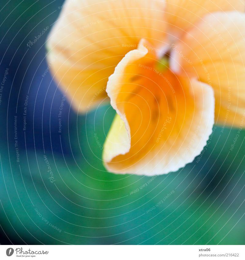 blüte Natur grün Pflanze gelb Blüte orange Umwelt Blühend