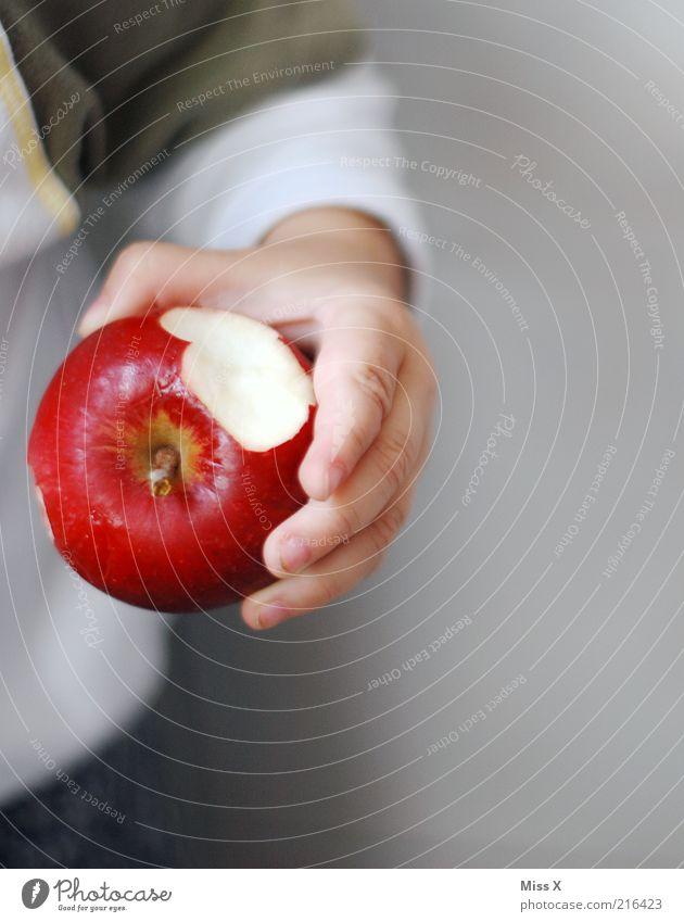 der kleiner Mann lebt gesund II Lebensmittel Frucht Apfel Ernährung Bioprodukte Mensch Kind Kleinkind Kindheit Hand Finger 1 1-3 Jahre Gesundheit lecker süß