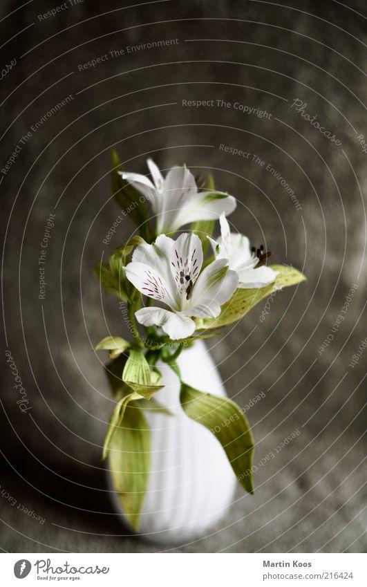 Stadium Pflanze Blatt Blüte ästhetisch schön positiv grün weiß Gefühle Frühlingsgefühle Duft Blumenstrauß Blumenvase Design Stil Dekoration & Verzierung