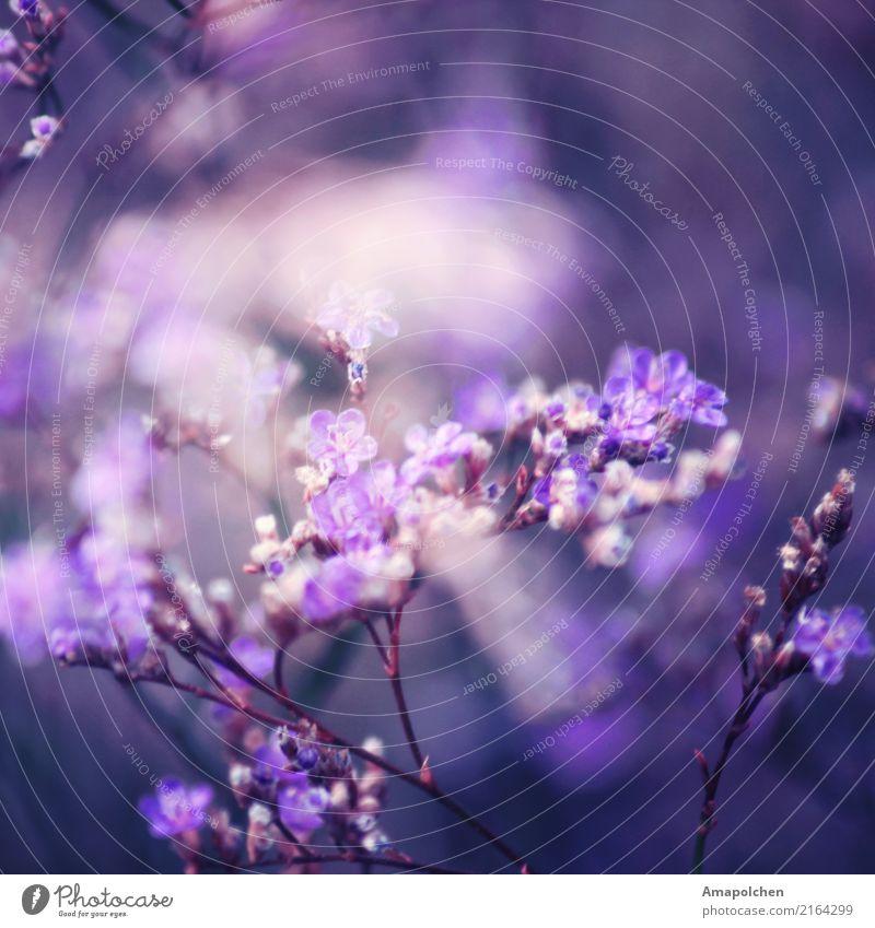 :18-02:: Natur Pflanze Sommer Blume ruhig Wald Umwelt Blüte Frühling Glück Garten Zufriedenheit Park Geburtstag Fröhlichkeit Sträucher