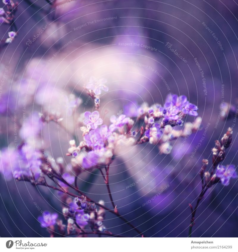 :18-02:: Valentinstag Muttertag Ostern Hochzeit Geburtstag Trauerfeier Beerdigung Taufe Umwelt Natur Pflanze Frühling Sommer Blume Sträucher Blüte Garten Park